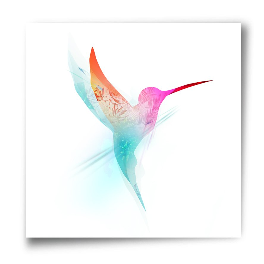 humming-bird,art print,collection, high-quality