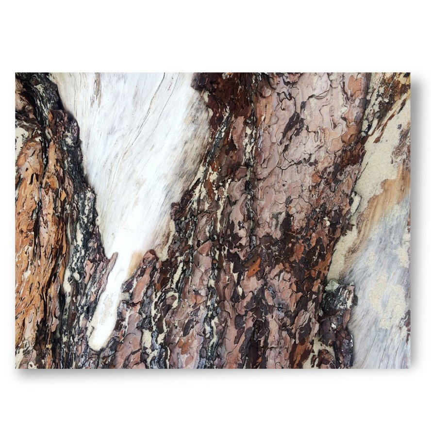 tree bark, high-quality unigue art prints, photography