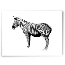 zebra, high-quality art prints